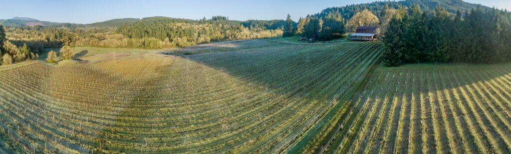 Panoramic views of Willamette Valley Vineyards